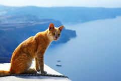 Greek red cat, against beautiful sea view of Santorini, Greece. Greek red cat, is sitting against beautiful sea view of Santorini, Greece royalty free stock images