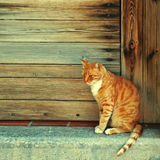 Greek red cat  in wood doorway at the old greek village (Crete, Greece). Royalty Free Stock Photography