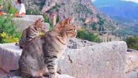 Greek Ruin Cats Stock Photography