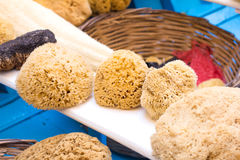 Greek sea sponges for body Stock Photography