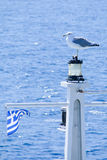 Greek Seagull Royalty Free Stock Photos