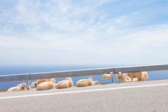 A greek sheep herd Stock Photo