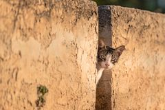 Greek cat looking through a stone wall at dusk, in the Peloponnese, Greece. Royalty Free Stock Photography