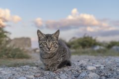 Greek stray cat by the windmills on the harbor of  Rhodes island Royalty Free Stock Image