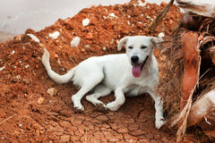 Greek stray dog Stock Image