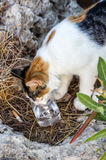 Greek street cat drinking water from the glass on the rocks Royalty Free Stock Images