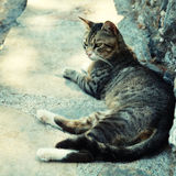 Greek street  cat on the sea pier (Crete, Greece) Stock Photography