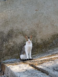 Greek street cat on stone stairs. One of the many street cats on the Greek islands Stock Photos