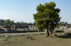 Greek temple paestum Royalty Free Stock Images