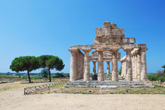 Greek Temple in Paestum, Italy Stock Photos