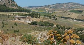 Temple of Segesta Royalty Free Stock Photography