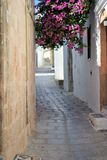 Greek town in summer with flowers. Greece travel holidays white sunny flowers quaint whitewash Rhodes ancient Royalty Free Stock Image
