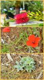 Greek vegetation collage Royalty Free Stock Images