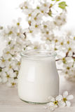 Greek yogurt with white flower background Stock Images