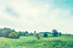 Greem meadow in the springtime Royalty Free Stock Image