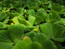 Greenâ€-‹nature†‹tropical†‹plant†‹ lizenzfreie stockfotografie