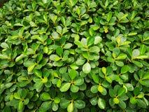 Greenâ€-‹nature†‹tropical†‹plant†‹ lizenzfreie stockbilder
