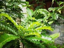 Greenâ€-‹nature†‹tropical†‹plant†‹ stockfotos