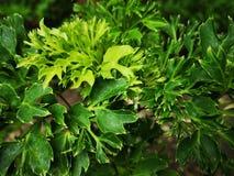 Greenâ€-‹nature†‹tropical†‹plant†‹ stockbilder