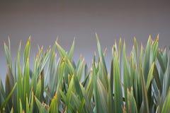 green Arkivbilder