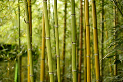 Green. Bamboo forest in the mountain Stock Photos