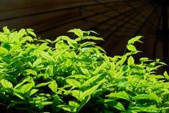 green Royaltyfria Foton