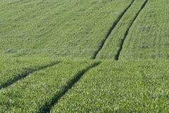 green Zdjęcie Stock
