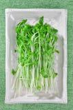 Green Royalty Free Stock Image