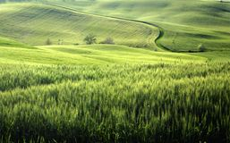 Green. A nice view of tuscany landscape Royalty Free Stock Photography