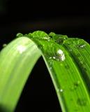 green Royaltyfri Bild