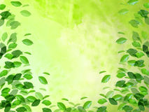 Green. Template background useful for web ,templates , postcards Stock Photo