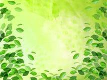 green Arkivfoto