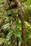 Green. Jungle detail, rainforest in North Queensland, Australia Stock Photos