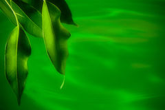 Green. Soft focus green leaves and water Stock Photo