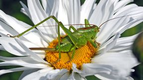 Green 8 Legged Insect on White and Yellow Multi Petaled Flower during Daytime Stock Photography