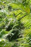 Green. Rainforest in northern Australia Stock Photos