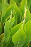 Green. Vitality Environment Refreshing Spring scenery Environmental protection Royalty Free Stock Photos