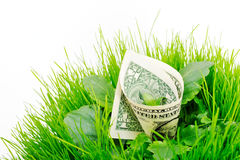 Green. Banknote folded inside the green grass and leaves Royalty Free Stock Images