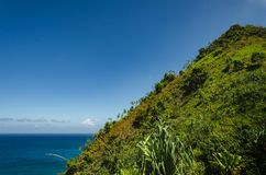 Green abrupt hill in front of the big blue sea in Hawaii, US. Hawaiian typical strong green vegetation over deep blue sea, US royalty free stock photos