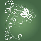 Green abstract background. An isolated white flower on green background Royalty Free Stock Photography