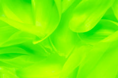 Free Green Abstract Background Stock Image - 40544851