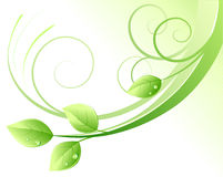 Green abstract background. Vector illustration of green abstract background and leaves with water drops Stock Image