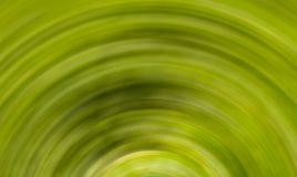Green abstract background of a hemisphere. Texture rotating monochrome floral pattern. Green abstract background of a hemisphere. Texture rotating monochrome Royalty Free Stock Photography