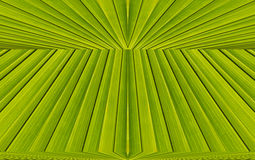 Green abstract background from  leaf pattern Royalty Free Stock Image
