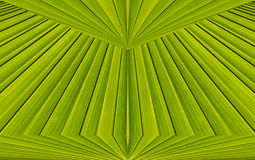 Green abstract background from  leaf pattern. Green abstract background from palm  leaf pattern Stock Photos