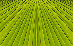 Green abstract background from  leaf pattern Stock Image
