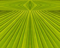 Green abstract background from  leaf pattern. Green abstract background from palm  leaf pattern Royalty Free Stock Image
