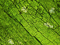Green abstract background, natural tree bark texture Stock Photography