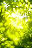 Green Abstract Background Of Foliage Stock Image