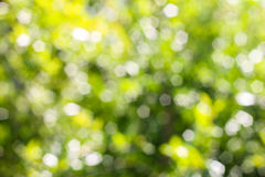 Green abstract bokeh, green background, blurred tree Royalty Free Stock Images